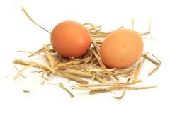Eier auf Stroh Stockbilder