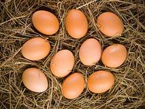 Eier auf Stroh Stockfoto