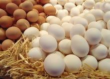 Eier auf Stroh Stockfotos