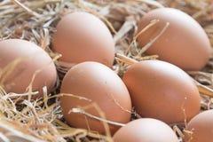 Eier auf Strohkorb Stockfotografie