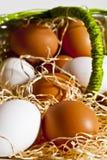 Eier aus dem Korb 5 heraus Stockbild