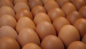 Eier bei der Reihen-Fabrik-Landwirtschaft stock footage