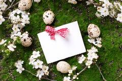 Eier, blühende Baumaste des Frühlinges und Empty tag Lizenzfreie Stockbilder