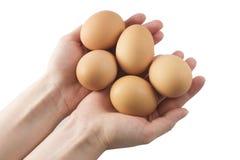 Eier in den Händen Stockfotografie