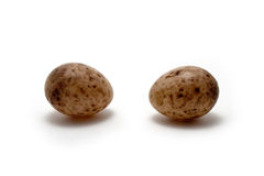 Eier des großen Tits Lizenzfreie Stockbilder
