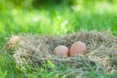 Eier des Huhns Lizenzfreie Stockfotos