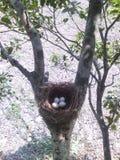 Eier des Vogels Lizenzfreies Stockbild