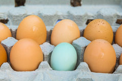 6 Eier - eine dieser Sachen ist nicht wie die anderen Lizenzfreies Stockbild