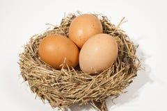 Eier in einem brodd Nest Lizenzfreie Stockfotos