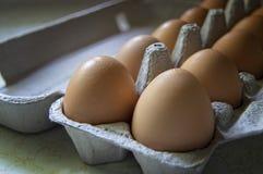 Eier in einem Karton stockfotografie