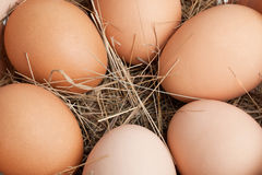 Eier in einem Kasten Lizenzfreie Stockfotografie