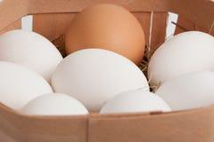 Eier in einem Kasten Lizenzfreie Stockbilder