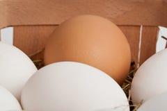 Eier in einem Kasten Stockbild