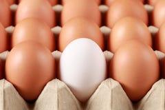 Eier in einem Kasten Stockfotos