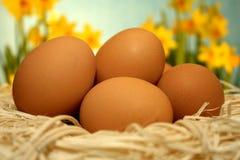 Eier in einem Korb Stockfotos