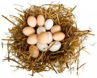 Eier in einem Nest Stockbild