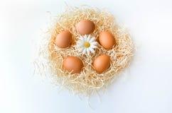 Eier in einem Nest Stockfoto