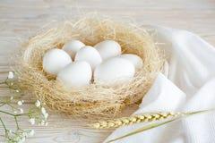 Eier in einem Nest Stockbilder