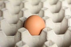 Eier in einem Papierbehälter Stockbild
