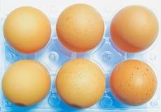 Eier in einem Plastikkarton Stockfoto