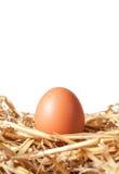 Eier in einem Strohnest Lizenzfreies Stockfoto