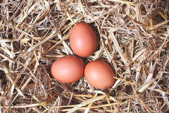 Eier in einem Strohnest Stockfotos