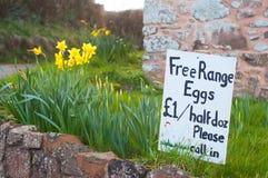 Eier für Verkauf Stockbild