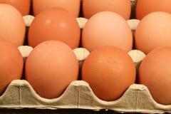 Eier im Behälter Stockfoto