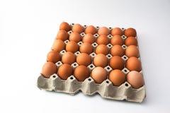 Eier im Behälter Lizenzfreie Stockbilder
