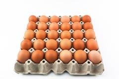 Eier im Behälter Stockbilder