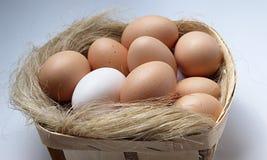 Eier im Behälter Stockfotos