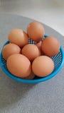 Eier im blauen Plastikkorb Stockbilder