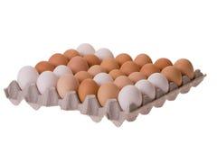 Eier im Eikarton Lizenzfreies Stockfoto