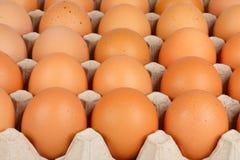 Eier im Gitter Stockbild