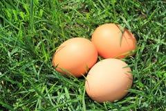 Eier im Gras Stockbild