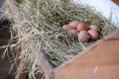 Eier im Heu stockbilder
