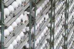 Eier im Inkubator Lizenzfreies Stockfoto