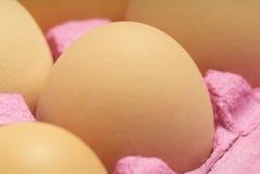 Eier im Karton Lizenzfreie Stockbilder