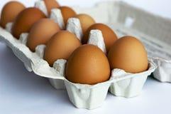 Eier im Karton Stockbild