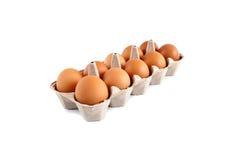 Eier im Karton Stockbilder