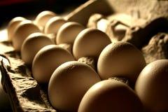 Eier im Karton Stockfotos