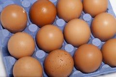 Eier im Kartonkorb Stockbilder