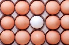 Eier im Kasten Lizenzfreies Stockbild