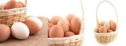 Eier im Korb auf weißem Hintergrund Stockbilder