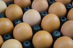 Eier im lokalen Markt Stockbilder