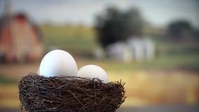 Eier im Nest stock video footage