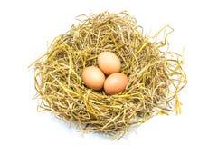 Eier im Nest Lizenzfreies Stockfoto