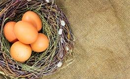 Eier im Nest. Lizenzfreie Stockbilder