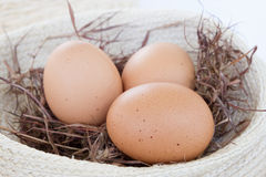 Eier im Nest Lizenzfreie Stockfotos