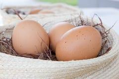 Eier im Nest Stockfoto